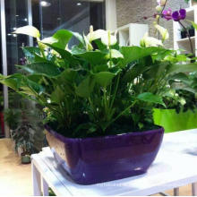 (BC-F1037) Fashionable Design Plastic Self-Watering Flower Pot