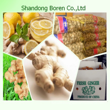2015 Fresh Ginger From China Shandong