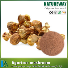 Agaricus Blazei Murrill Extract