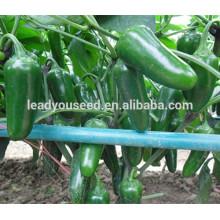 МР10 Зидана буллер формы гибридной лучшие семена перец по продажам