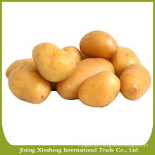 Sweet potato seed