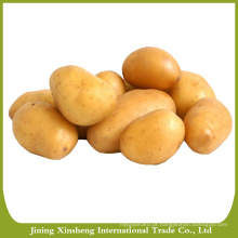 Batata, sementes