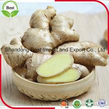 Exportation de gingembre séché à l'air --- à bas prix