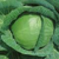Chou vert frais de catégorie A à vendre