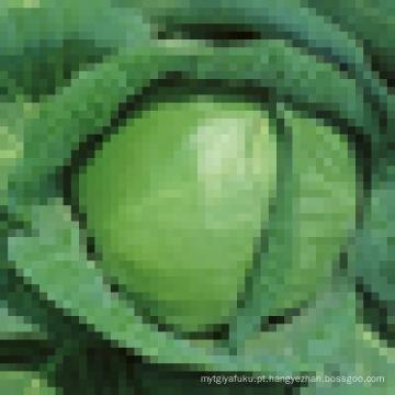 Grade Um repolho verde fresco à venda
