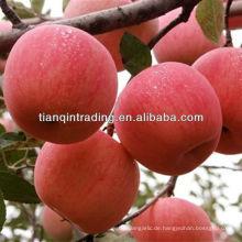 Marken-Fuji-Apfel