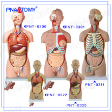 PNT-0322cc Plastic Human Torso body Anatomical model