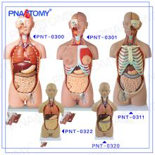 Modelo anatômico do corpo humano plástico do torso de PNT-0322cc