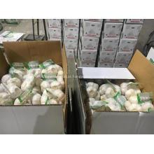 2018 venda quente limpo normal branco fresco alho