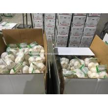 2018 hot selling clean normal white fresh garlic