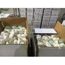 2018 venta caliente limpio normal ajo blanco fresco