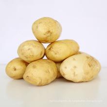 2017 neue Ernte frische Süßkartoffel Großhandelspreis