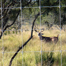 Deer Fence Netting for Livestock