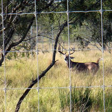 Deer Fence Netting for Livestock
