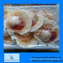 Sea 7-8cm scallop seafood