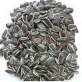 Семян птицами семена подсолнечника от Jngogo
