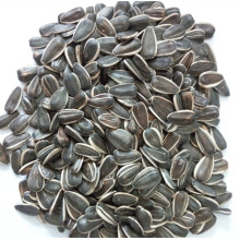 Bird Seed of Sunflower Seeds From Jngogo