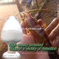 Natural Wholesale Bulk supply odorless Garlic Extract Allicin powder