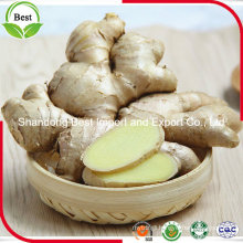 Chinese Fresh Ginger Old Ginger