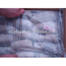 High Quality Whole Round BQF Frozen Cuttlefish