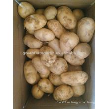 Papa, cosecha, fresco, patata, semilla