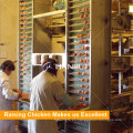 Máquina automática de recogida de huevos de aves de corral de huevos de gallina