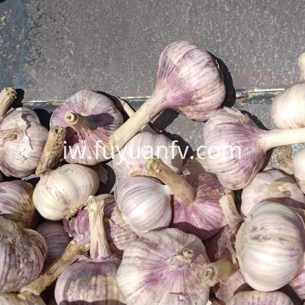 2019 New Crop Normal White Garlic