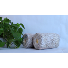 Frozen Oyster Mushroom Bags/Substrate GAP