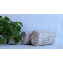 Sacos de cogumelos de ostra congelados / GAP de substrato