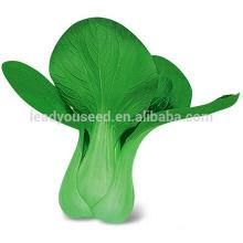 PK07 Aoguan graines de pakchoi hybrides F1 résistant au froid, graines de colza pour la plantation