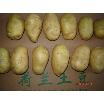 Good Quality Fresh Potato In Competitive Price