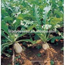 MR02 Gaoshuai société de graines de radis chinois de haute qualité