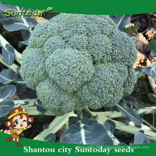 Suntoday garden seeds catalogue vegetable F1 buying organic seeds online heriloom broccoli seeds(A42001)