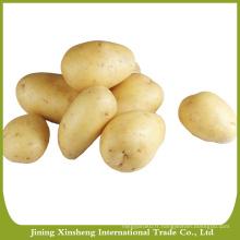 Graines de pommes de terre de Hollande