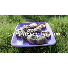 Visage de champignons Shiitake lisse