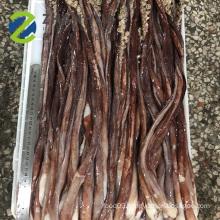 frozen long size giant squid tentacle sexual organ gigas squid