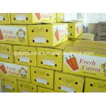 Zanahoria fresca del cartón 10kg (150-200G)