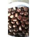 Chinese Fresh Chestnut and Chestnut Powder