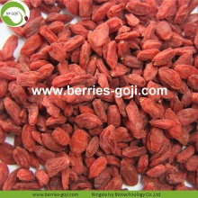 Factory Supply Fruit Nutrition verbessern Sehkraft Goji Beeren