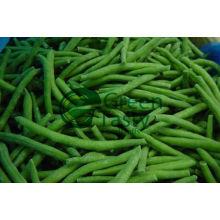 Légumes en conserve de haricots verts français (MIC)