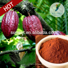 Top Hot 2015 Sex Stamina Cacao tree seeds Extracto de cacao