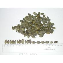granos de semilla de pumpkine grado AA