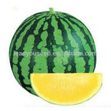 W05 Mihuang no.5 medium maturity f1 hybrid seedless watermelon seeds