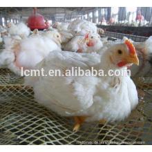 Hühnerhaus Fütterung und trinken Geflügel Masthähnchen System