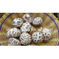 Produits agricoles de champignons Shiitake à fleurs blanches séchées