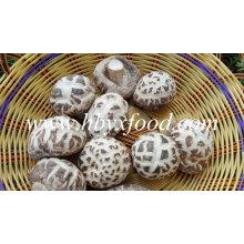 Productos agrícolas de la seta de Shiitake de la flor blanca secada