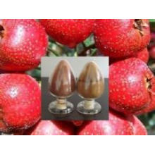 Hawthorn Berry Fruit in Bulk