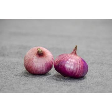 Fresh Onion In Bulk Cheap Red
