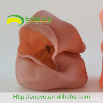 АН-У1 дешевые маска оптом Стоматологические учебные головы модели Производитель маска Китай