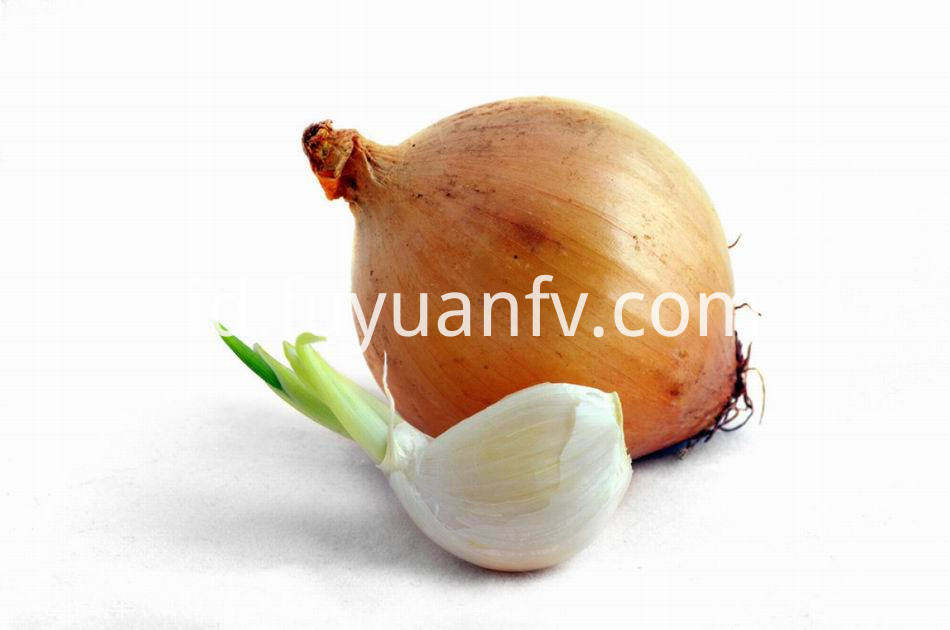 Yellow Onion 17